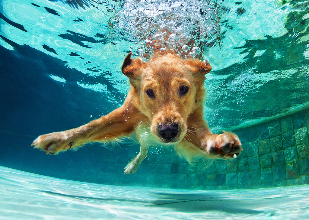 Los planes más refrescantes del verano junto a nuestro perro