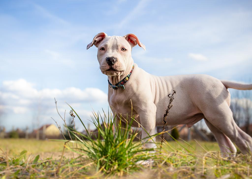 Los 7 problemas más comunes para las mascotas en el verano