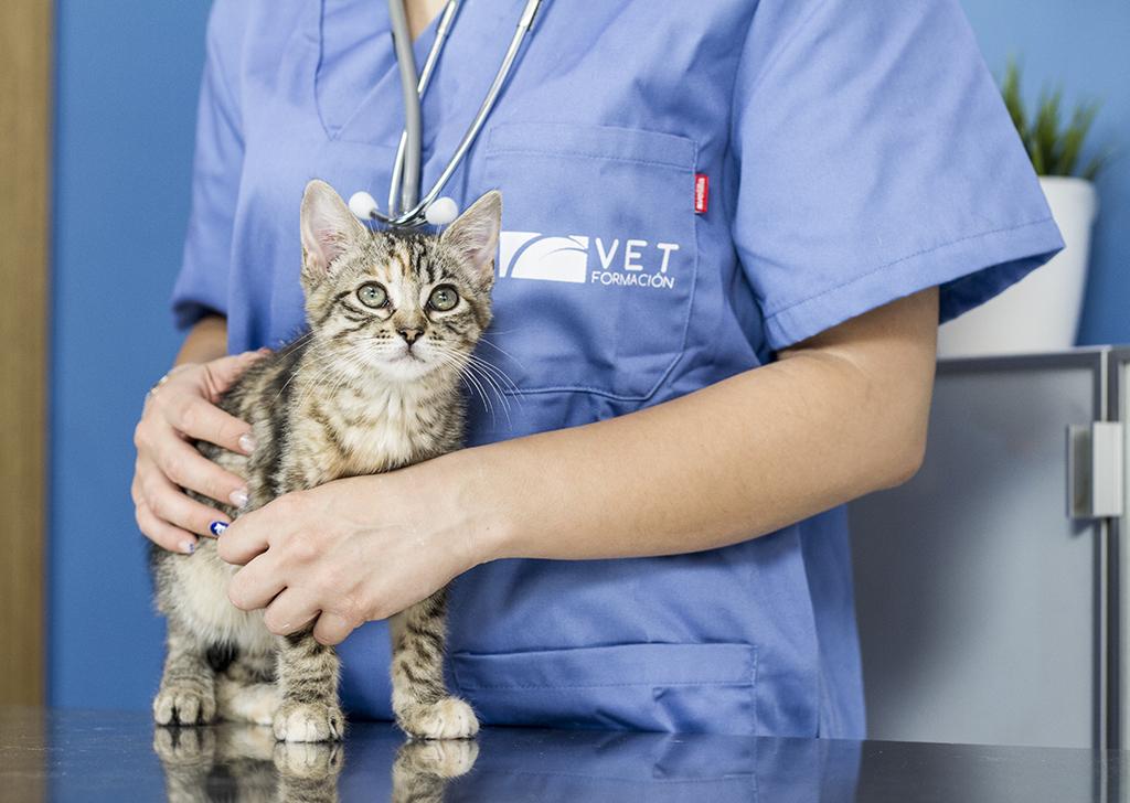 ¿Por qué hacer un curso de Auxiliar Veterinario?