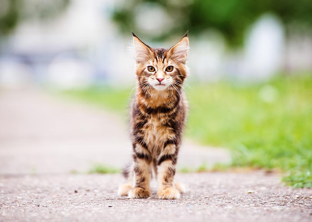 ¿Por qué es habitual que los gatos de la calle estén resfriados?