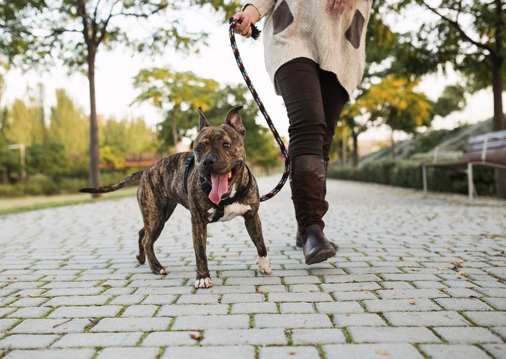 ¿Qué hacer si mi perro no quiere pasear con correa?