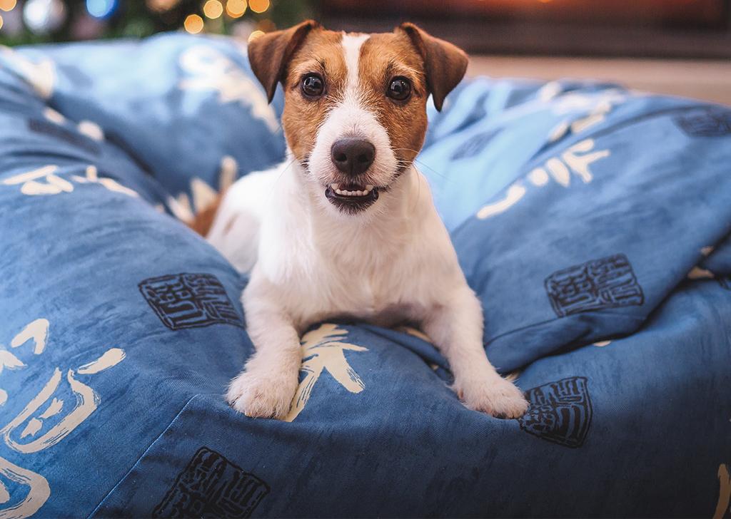 """La """"vuelta al cole"""" de nuestros perros"""