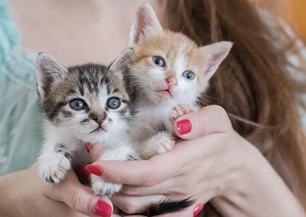 5 razones para adoptar dos gatos en vez de uno