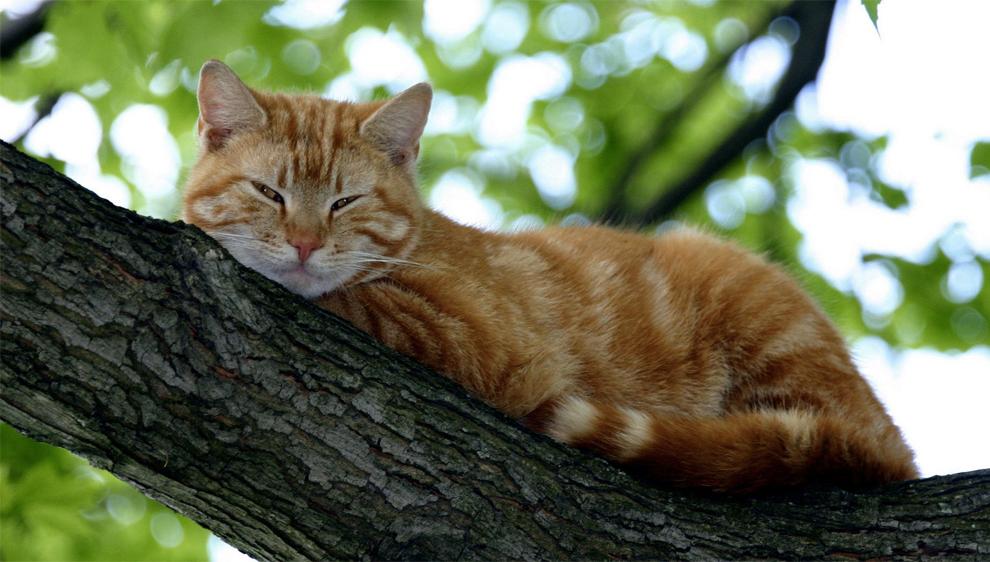 Enfermedades del tracto urinario inferior en el gato (FLUTD)