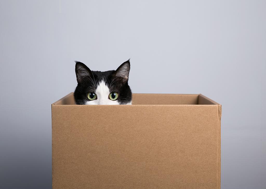 Enriquece el ambiente de tu gato de una manera económica