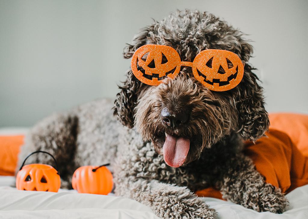 ¿Cómo hacer que Halloween sea una fiesta segura para tu mejor amigo?