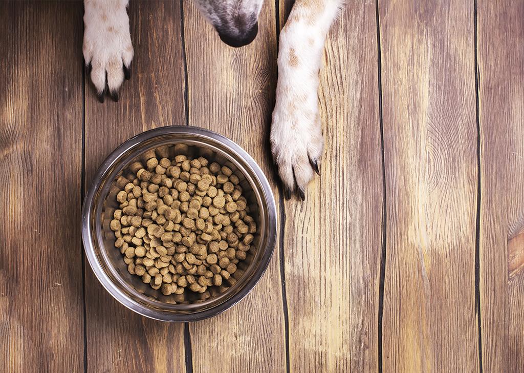 Trucos para elegir el alimento más adecuado para nuestro perro