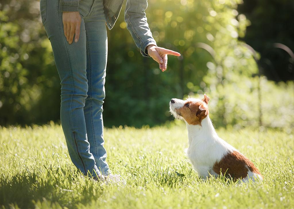 Etología animal: respeta, entiende y ayuda a tu mejor amigo