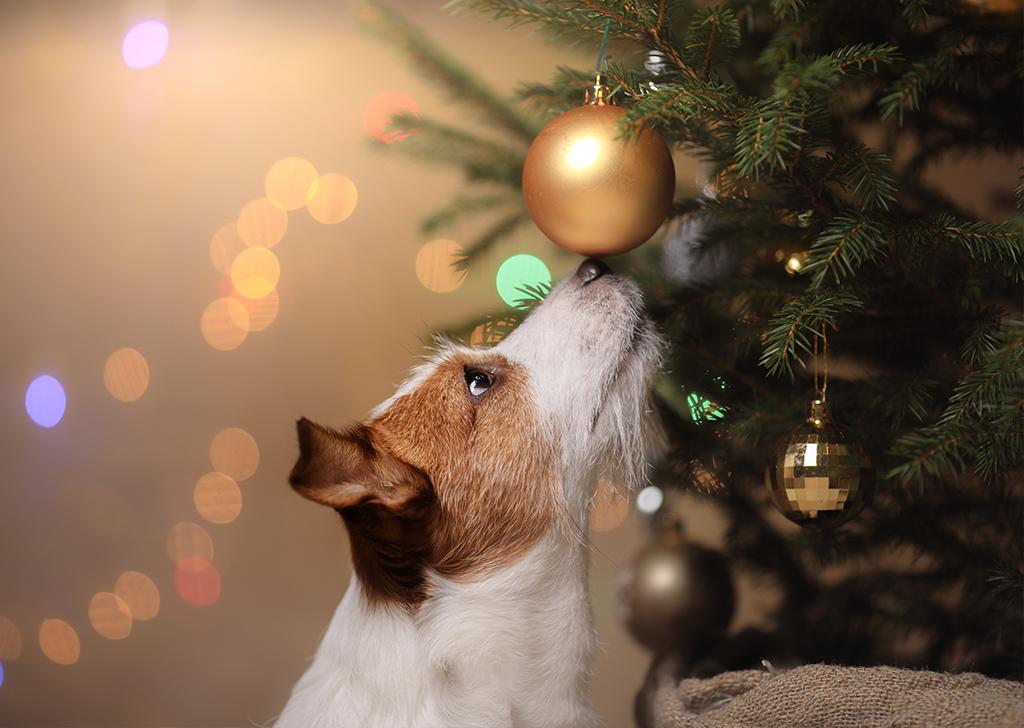 Los peligros de las plantas navideñas para perros y gatos