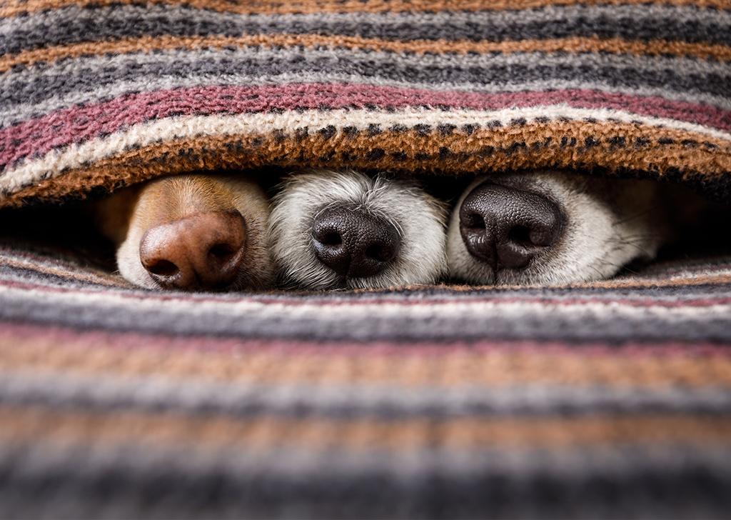 Nos encantan las narices caninas, ¿sabías estas curiosidades sobre ellas?