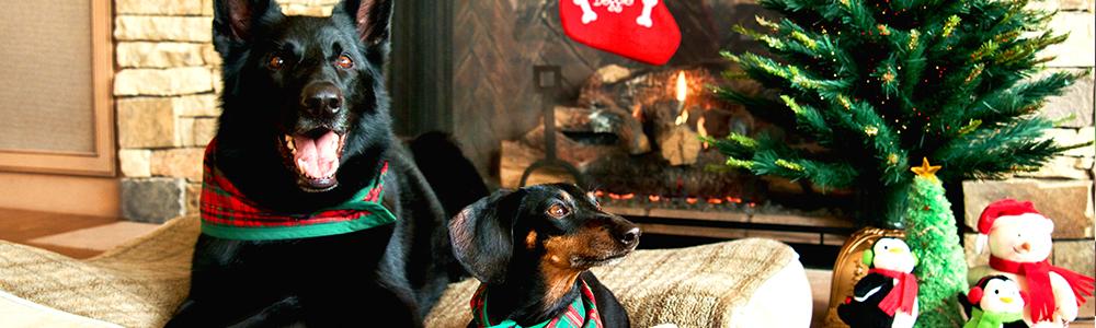 Riesgos navideños para los perros