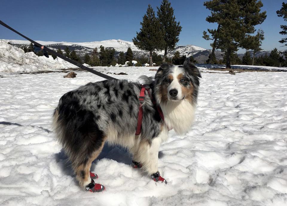 Botas para proteger las patas de nuestro perro en la nieve