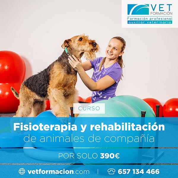 Fórmate con los mejores profesiones veterinarios