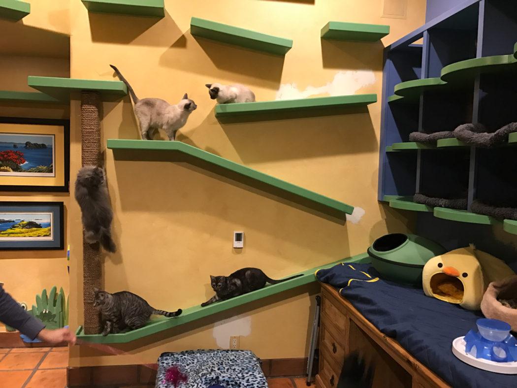 Hogar para 22 gatos rescatados
