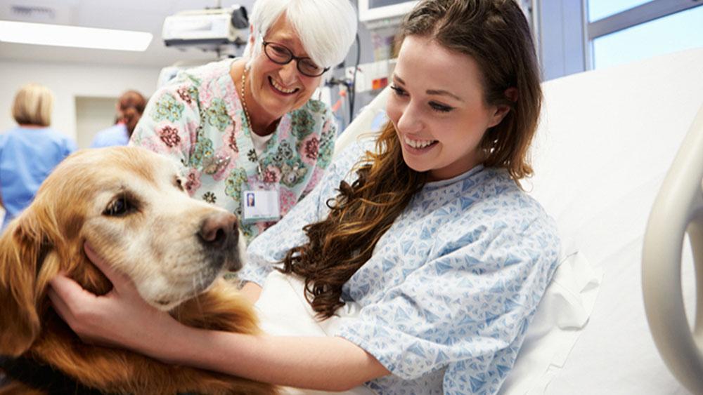 Ayudar a las personas gracias a perros, gatos y caballos