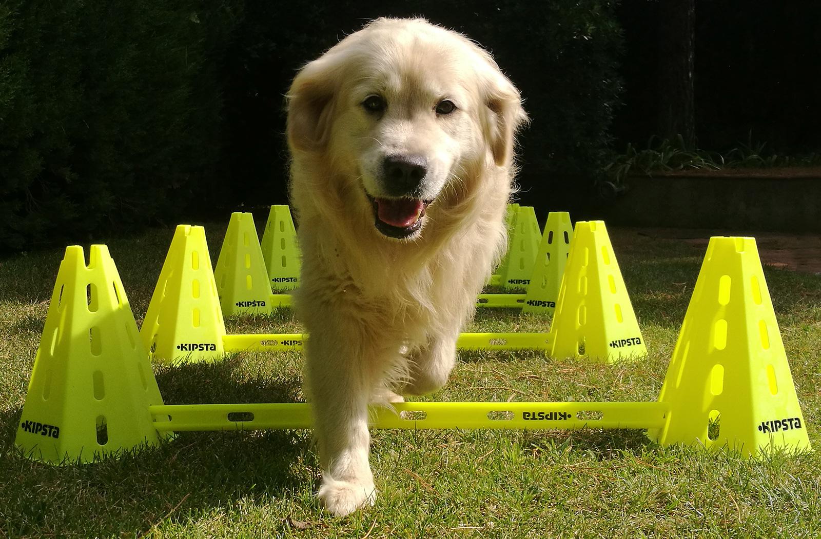 Fisioterapia y rehabilitación de animales de compañia