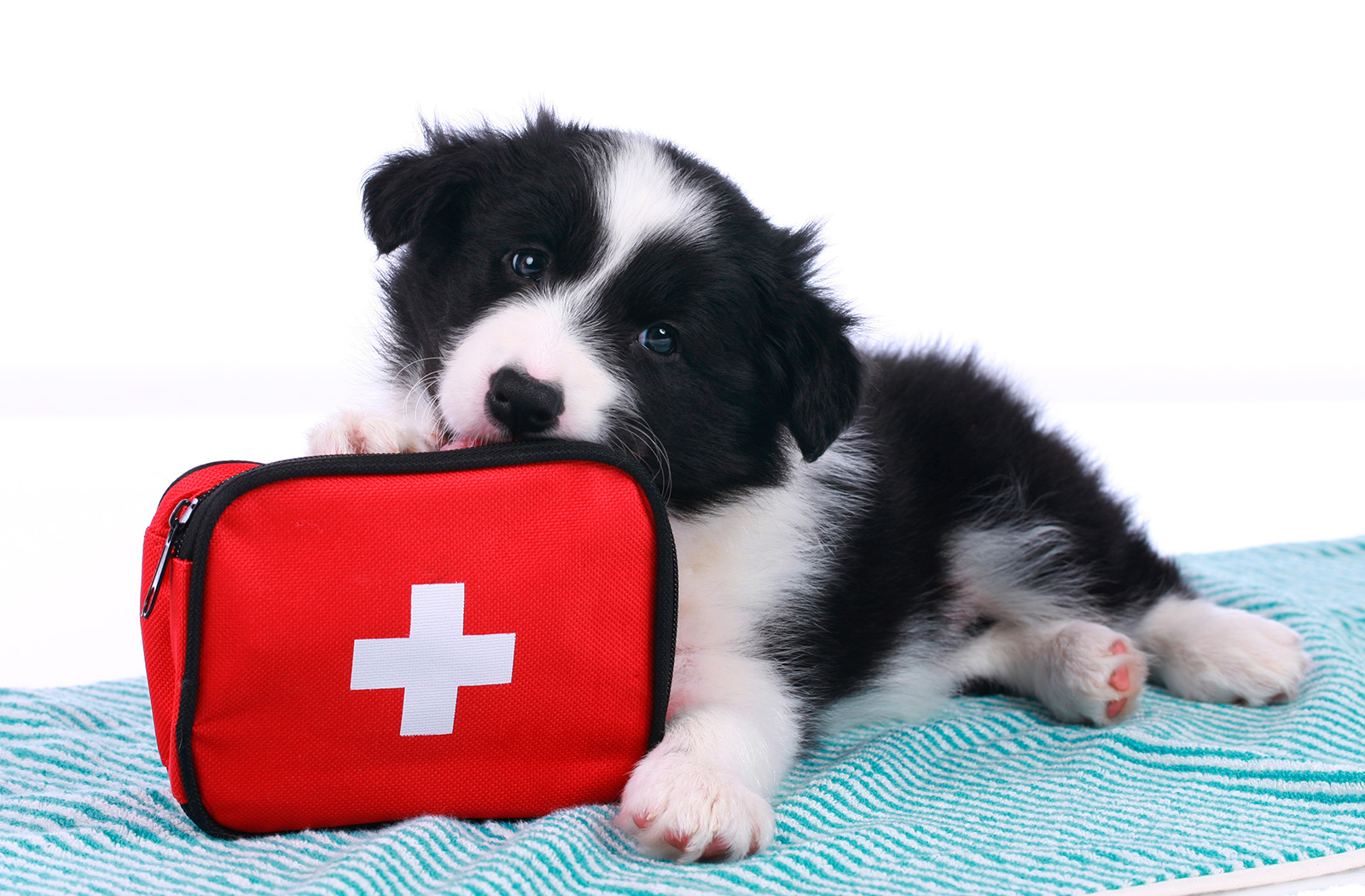 Primeros auxilios para animales de compañia
