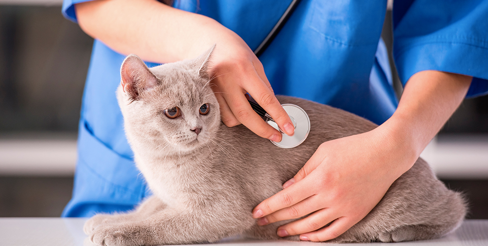 ATV - Auxiliar técnico veterinario